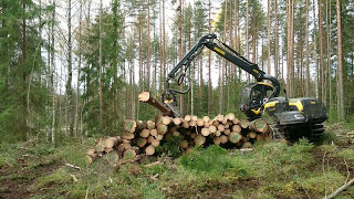 A big big pile of logs on the harvester. ponsse scorpion king h7