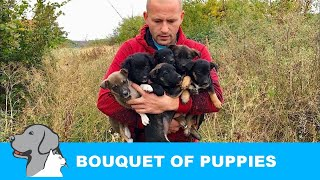 six-puppies-rescued-from-bushes