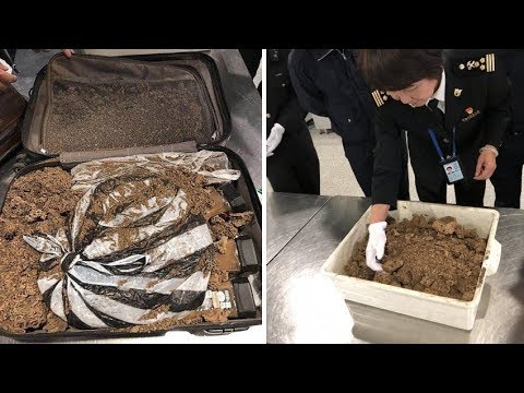 Customs officials catch man Smuggling Entire ANT Colony from Africa into China