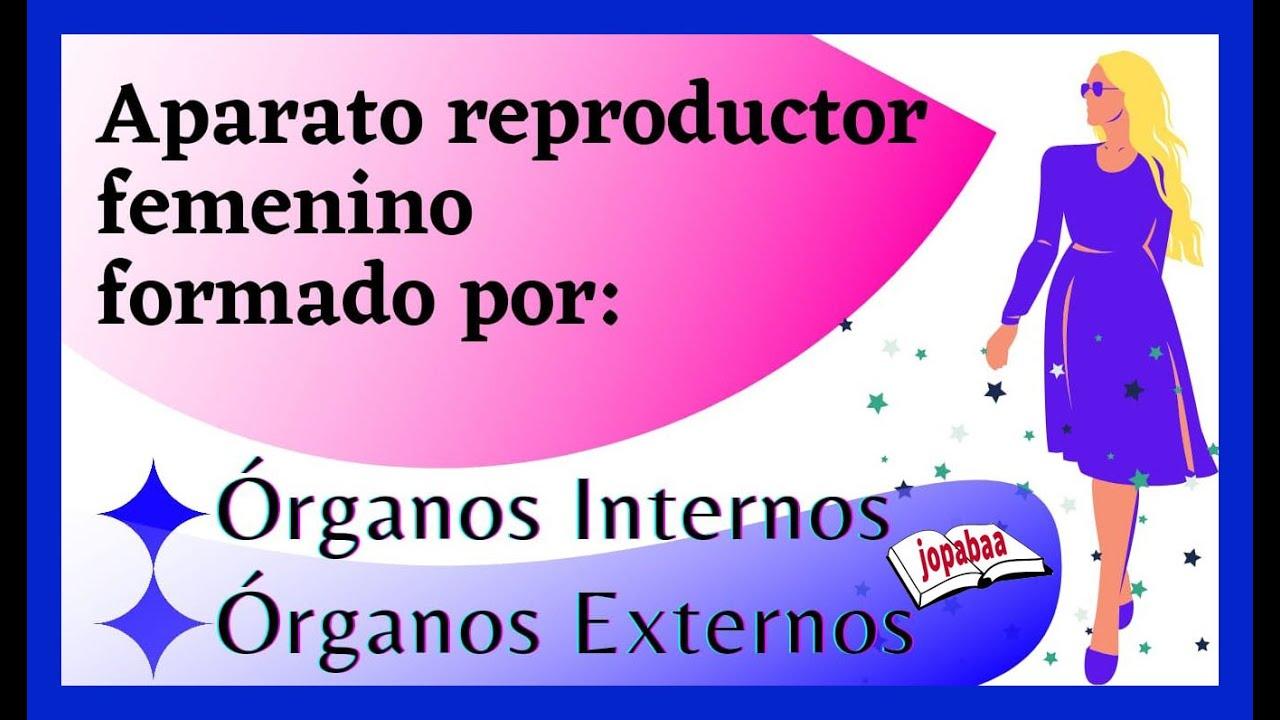 Aparato Reproductor Femenino está formado por: órganos internos y ...