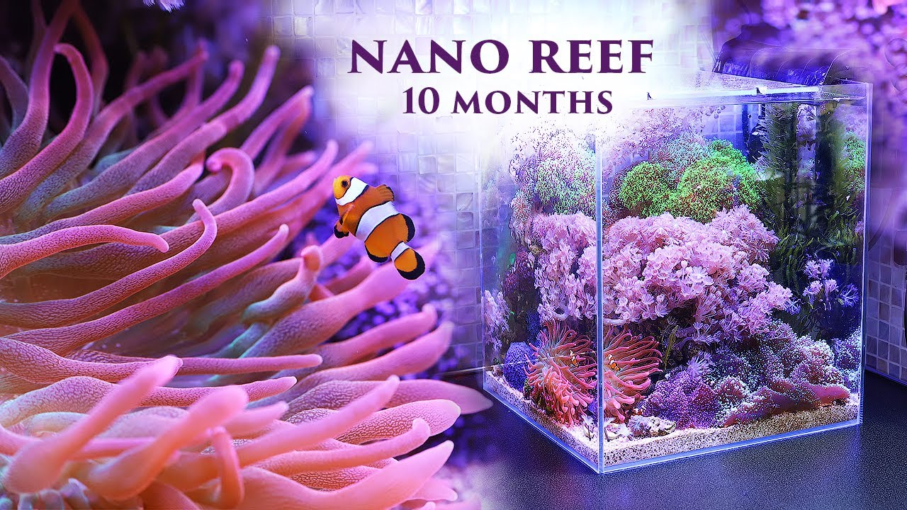 Море 30л: все получилось! 10 месяцев со старта / Marine aquarium: nano reef  10 months after start.