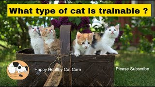 What type of cat is trainable