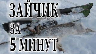 Охота на зайца 2017 ( зайчик за 5 минут )