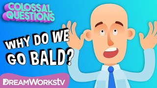 Why Do People Go Bald? | COLOSSAL QUESTIONS