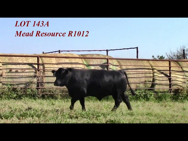 Mead Angus Lot 143A