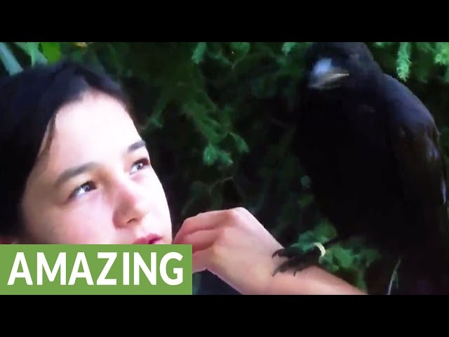 "Rescued baby crows return each spring to say ""Hello"""
