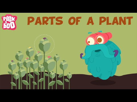 Parts Of A Plant | The Dr. Binocs Show | Learn Videos For Kids