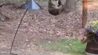 「ちょ、賢すぎるだろ!」バードフィーダーの中身が食べたいアライグマ、見事やらかす
