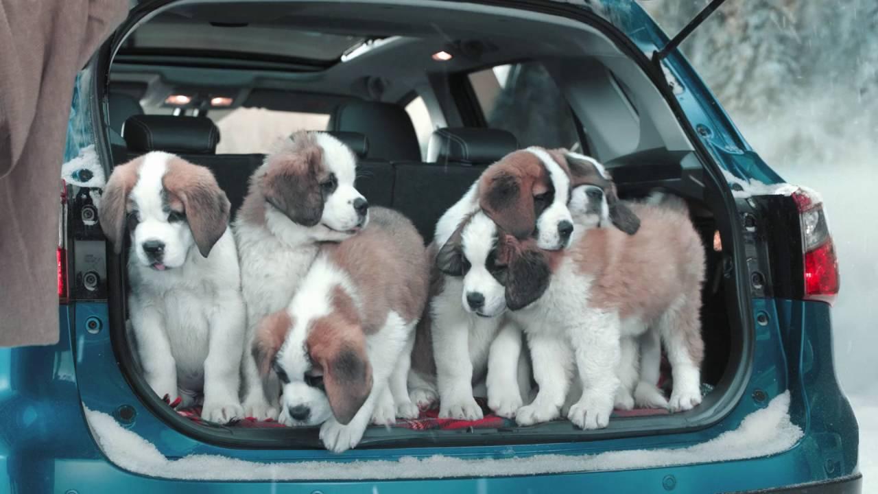 Image result for Saint Bernard Hund im Auto