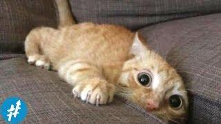 Gemesin Banget, 7 Kucing Lucu TERPOPULER Di Instagram Ini Wajib Kamu Follow