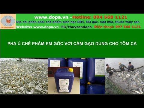Cách Pha Ủ Chế Phẩm EM Gốc Với Cám Gạo Dùng Cho Nuôi Tôm Cá