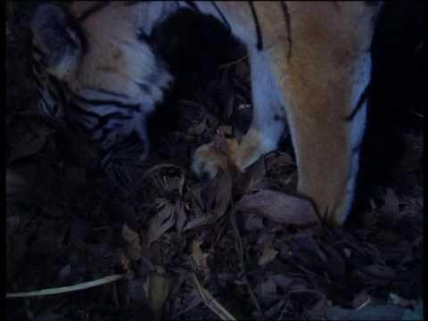 documentaire-animalier-chroniques-de-l'asie-sauvage-dvd-1/3