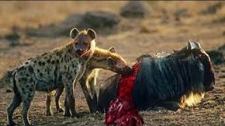 Удивительные моменты из жизни животных / Самые захватывающие кадры из жизни животных