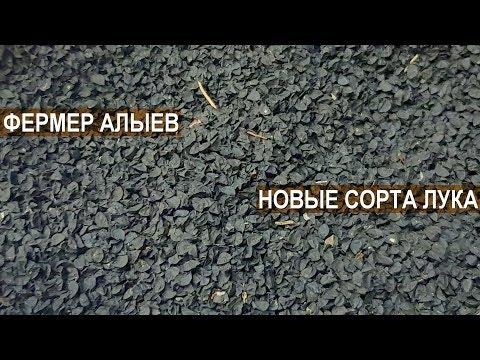 Фермер Роман Алыев. НОВЫЕ СОРТА ЛУКА И ЧЕСНОКА