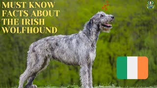 Getting To Know Your Dog's Breed: Irish Wolfhound Edition