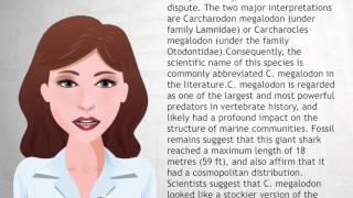 Megalodon - Wiki Videos