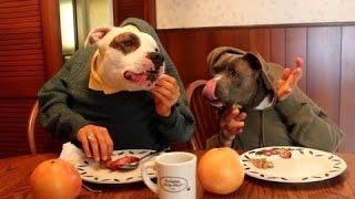 Собаки едят с человеческой рукой. Сборник [NEW HD]