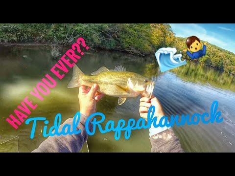 Fishing The Tidal Rappahannock River For Largies