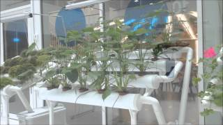 Green Fortune - Tubegarden at Klarna