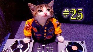 Забавные приколы с котами 2015 Оборжаться