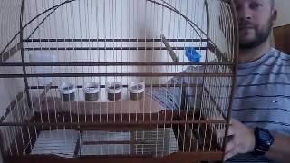 Preparando gaiola pra coleiro