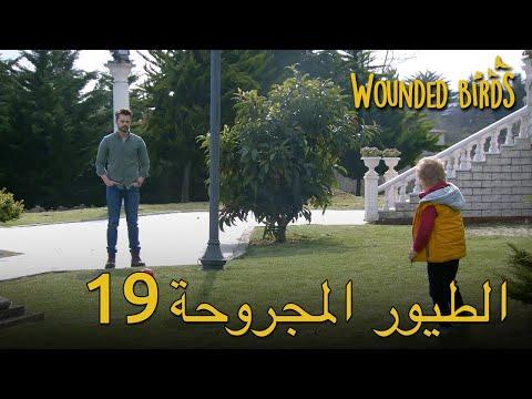 Wounded Birds Arabic 19 | 19 الطيور المجروحة