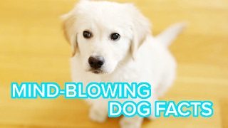 Crazy Things You Didn't Know Your Dog Could Do