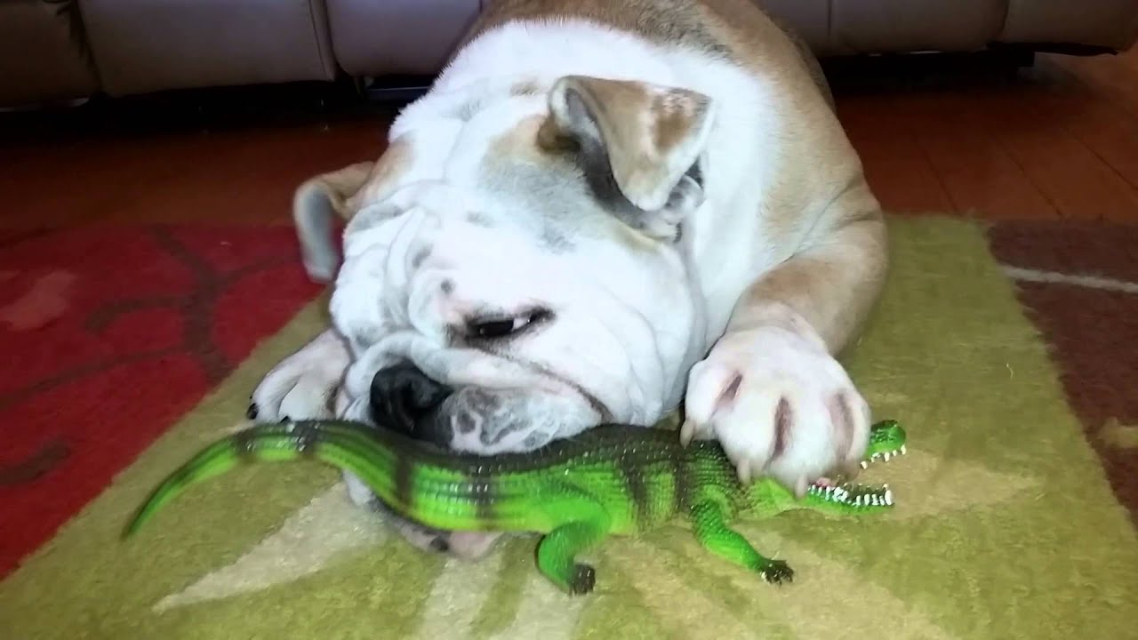 Gator Eating Georgia Bulldogs