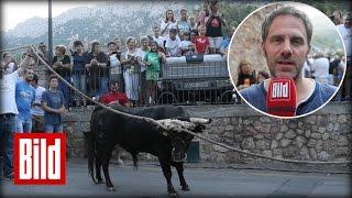 """""""Es bou Fornalutx"""" BILD bei der letzten Stier-Hatz auf Mallorca"""