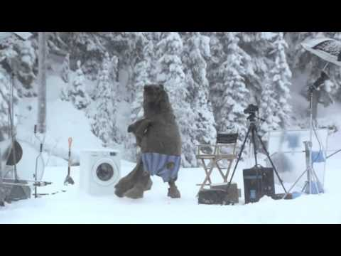 Huge Bear Surprises Samsung Crew On Ecobubble Washing Machine Photo Shoot In Bc