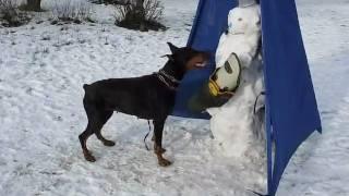 Зимние развлечения для спортивных собак.