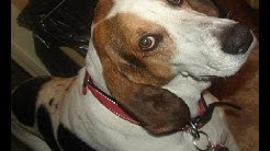 WARNING Never Use: Emergency Care Pet Hospital, Beach, Blvd. Jacksonville, FL