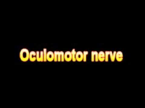 What Is The Definition Of Oculomotor nerve