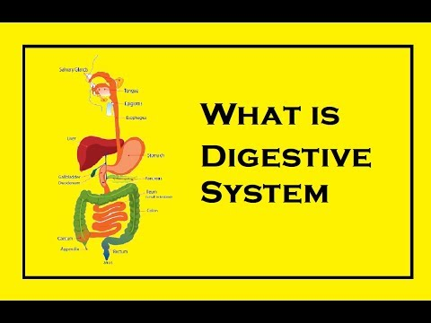 Human Digestive system Anatomy ! All about Digestive Organs [English]