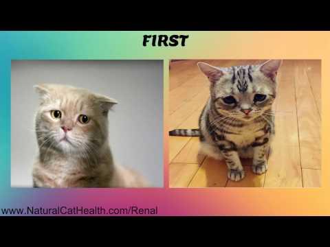 Symptoms Of Feline Kidney Disease And Natural Solutions