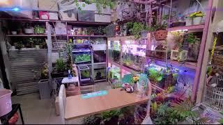 그린레인(Green rain)수경식물 모음 영상