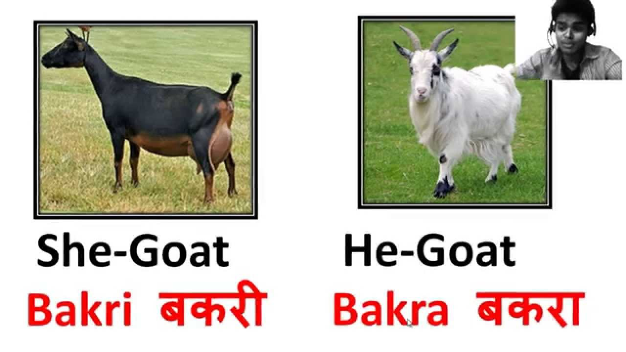 40 Animals Names In Hindi with Pictures