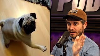 Ethan Klein On Count Dankula Going to Prison