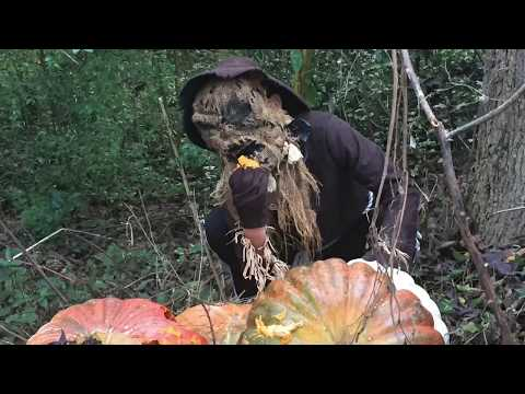 The Scarecrow Part 2...