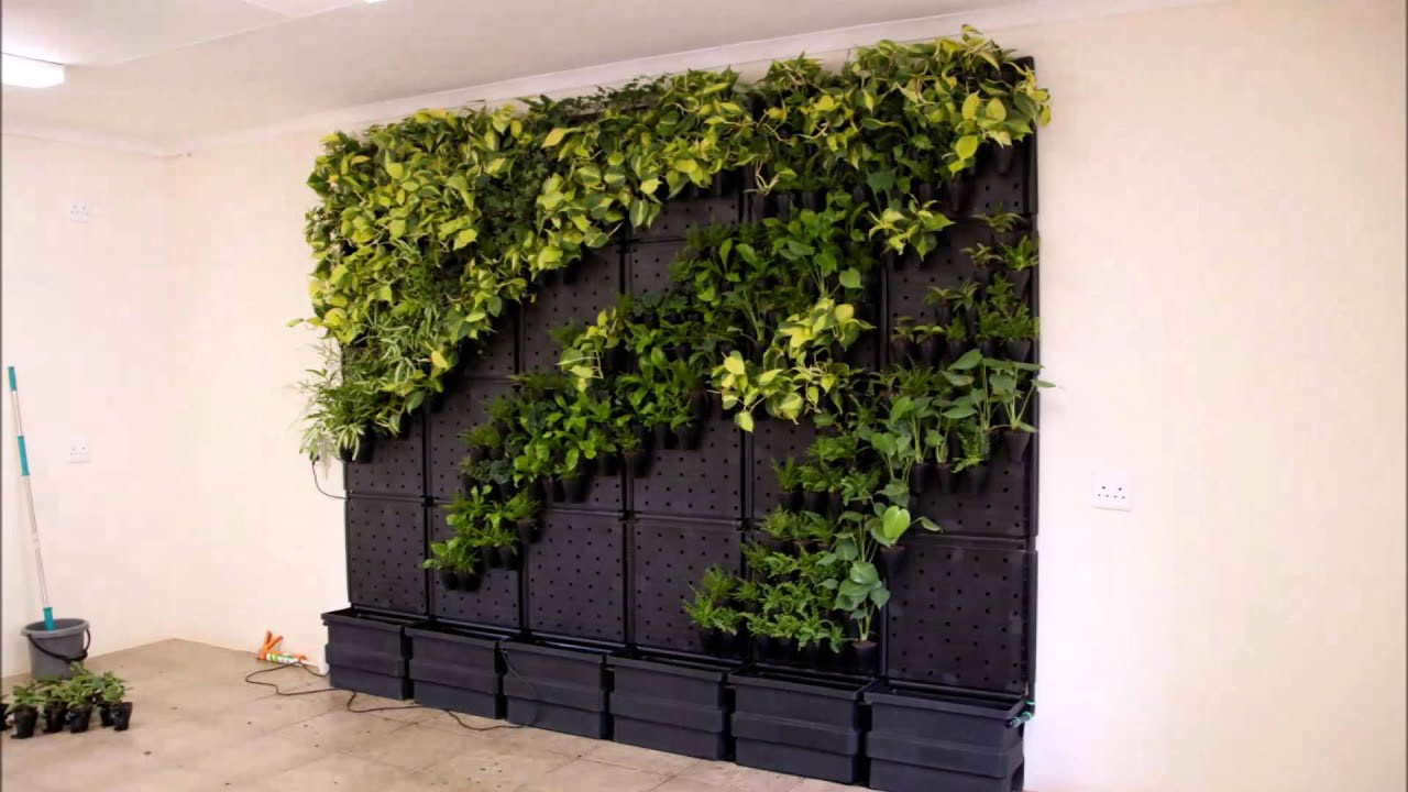 Modiwall Vertical Garden DIY Time Lapse   YouTube
