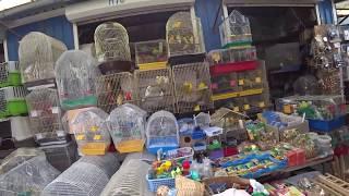 VLOG : Еду за покупками для ежа ! Сотни питомцев , которые ждут своих хозяев !!!