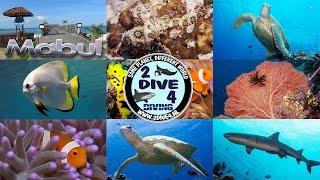 Scuba diving with Borneo Divers on Mabul and Sipadan Island Malaysia 2013 HD (part 1)
