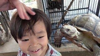 おでかけ こんなに近くに動物が!動物園 ノースサファリサッポロ レオ★スマイル thumbnail