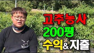 고추농사 200평 수익과 지출비용 공개!