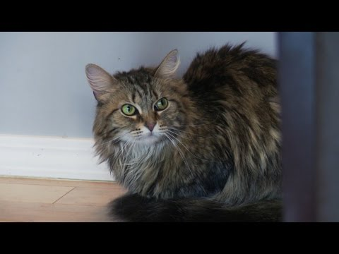 Lily Becomes a More Confident Kitty | My Cat From Hell