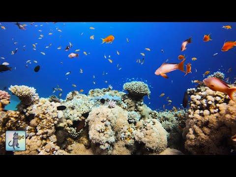 4K Coral Reef Aquarium ~ Relaxing  for Sleep Study Meditation & Yoga • Screensaver • 3 HOURS