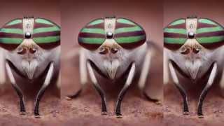Baskerville - Fruitfly