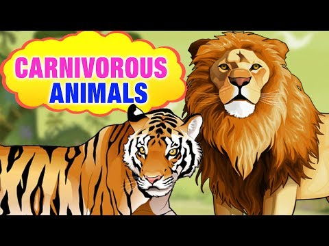 Carnivorous Animals Name For Kids With Picture | Carnivorous