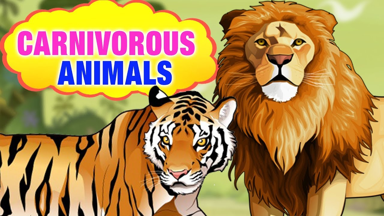 Carnivorous Animals Name For Kids With Picture | Carnivorous Animals List |  Simba Tv