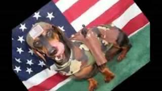 FUERZA LAVASORIANA = DOGS! (Sparta Remix)